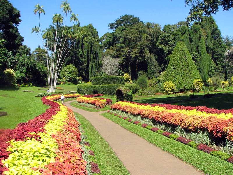 Botanical Garden in Peradeniya
