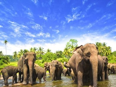 Luxury Tour in Sri Lanka
