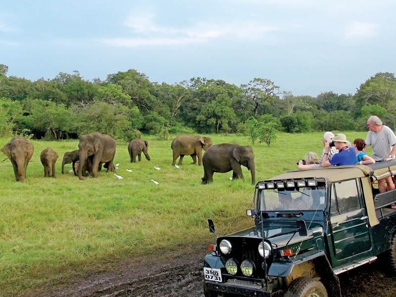 Jeep safari in Minneriya
