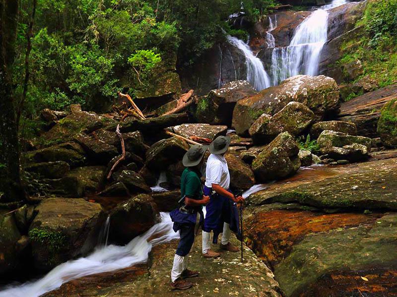 Singharaja rain forest