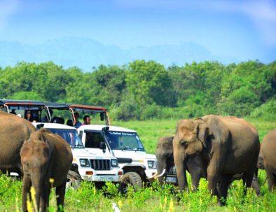 Udawalawe Jeep Safari