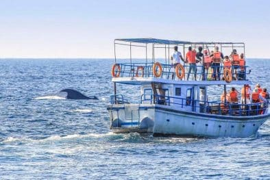 Whale and Dolphin Watching in Sri Lanka