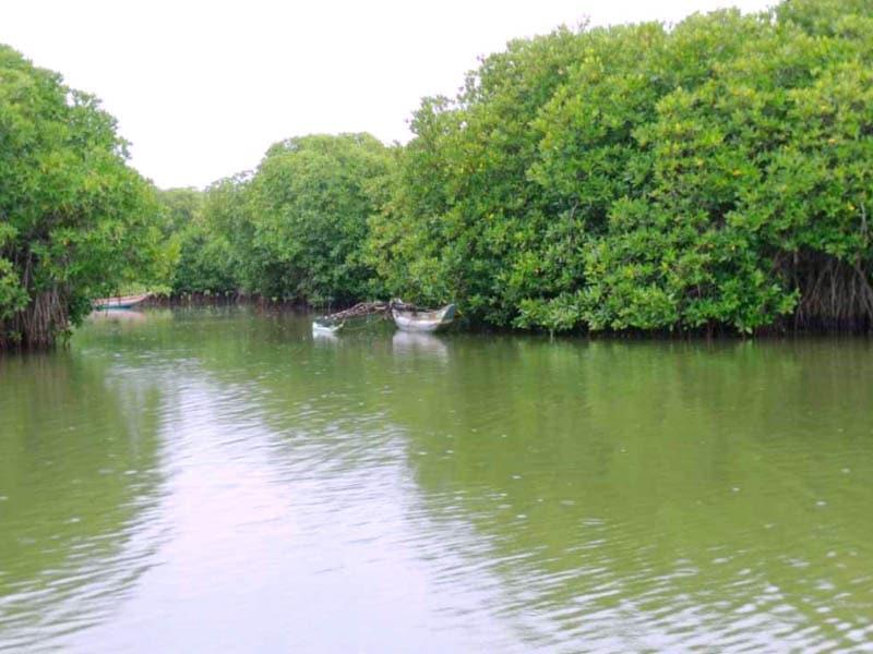 muthurajawela marsh